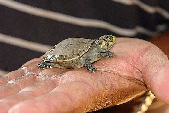 Holding a baby turtle in hand
