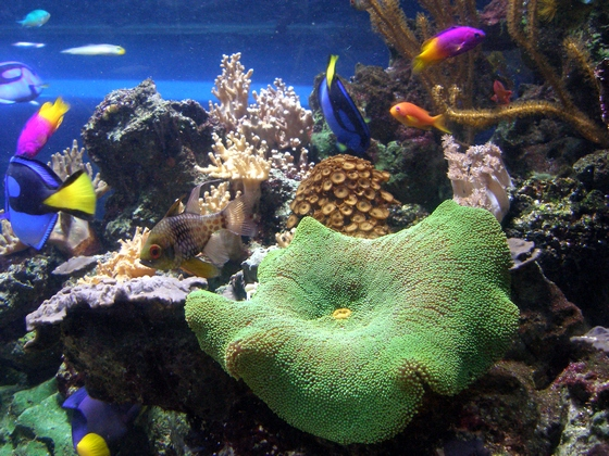 Underwater corals and fish