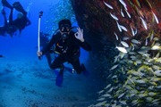 Diving Adventures in Vanuatu
