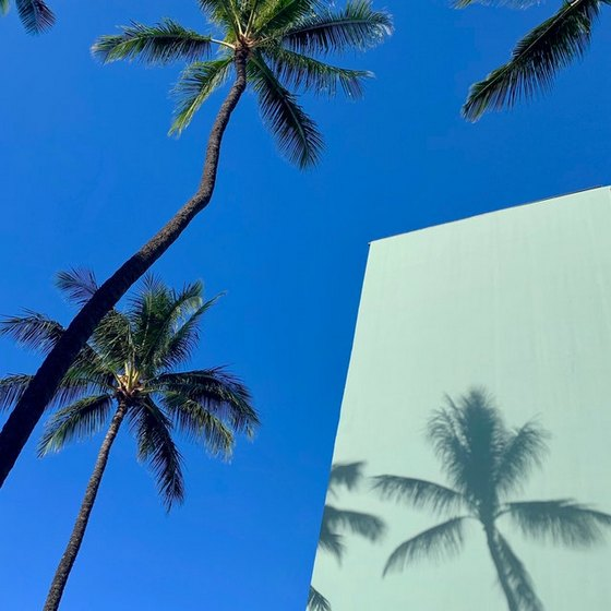 two palms and blue sky