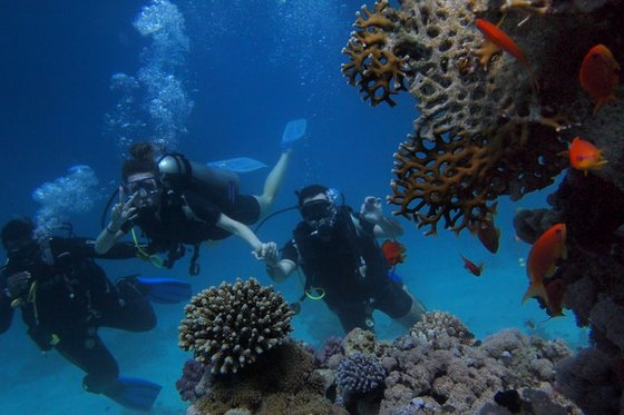 Three people scuba diving next to a coral reef.